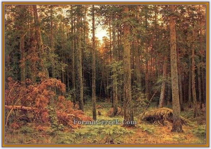 Çam ormanı 1865